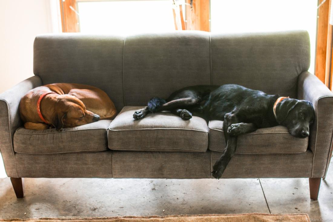 dogs on couch door open.jpg