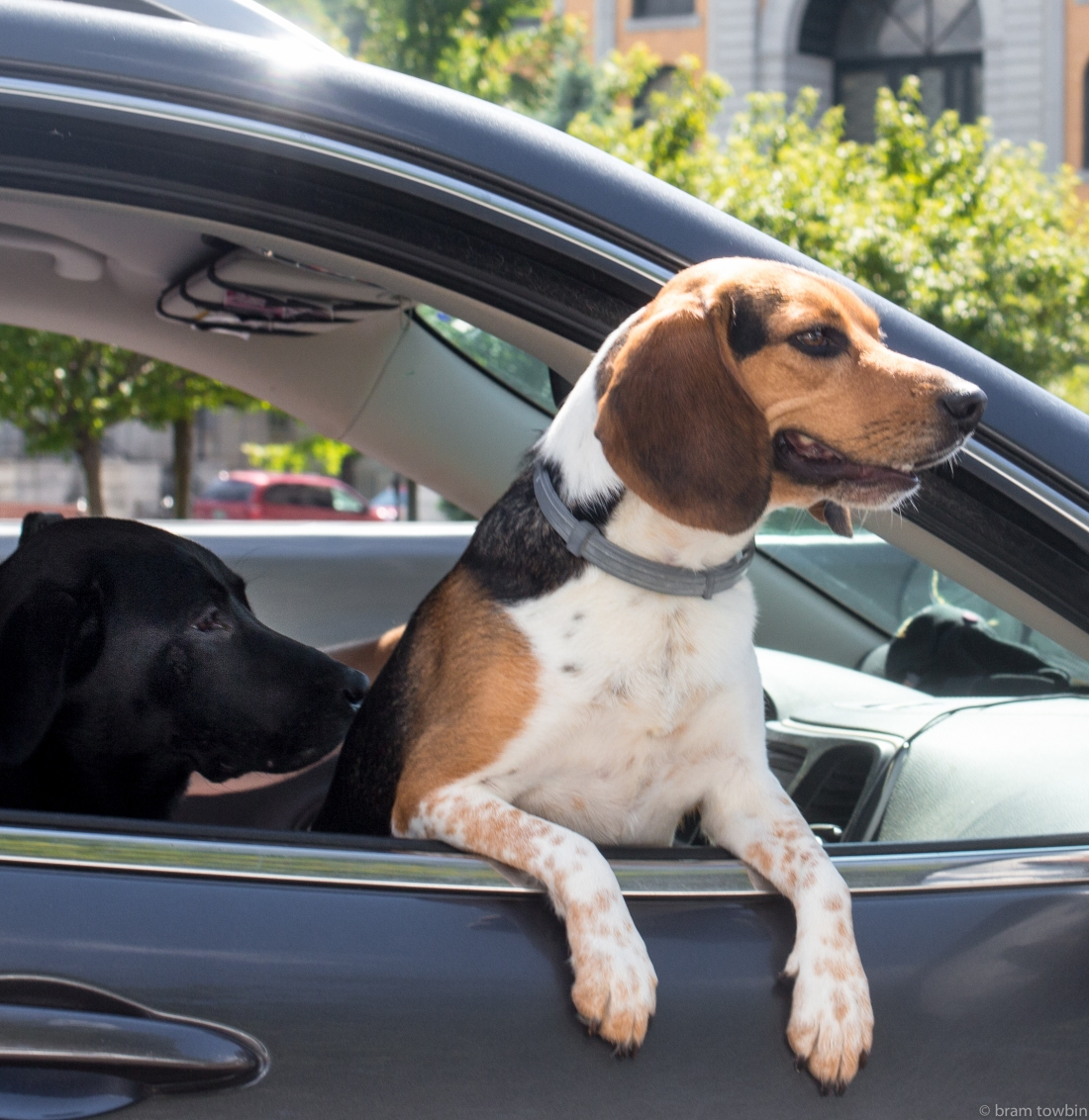 two dogs hanging out window.jpg