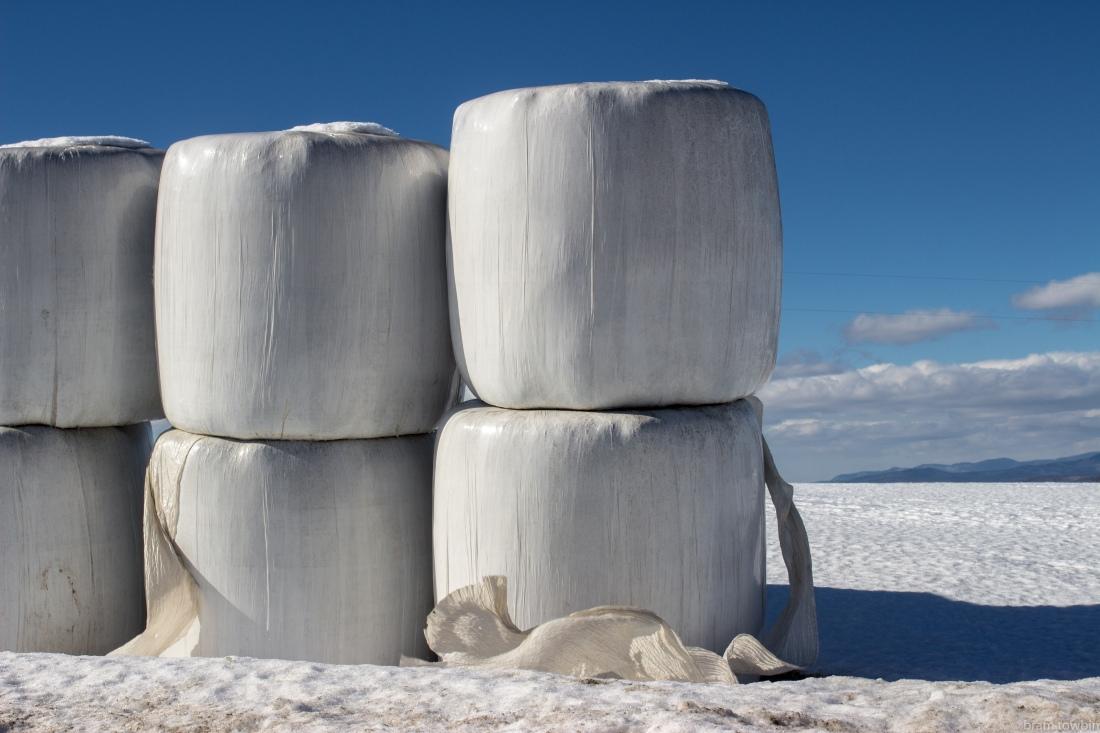 cu marshmellows in snow.jpg