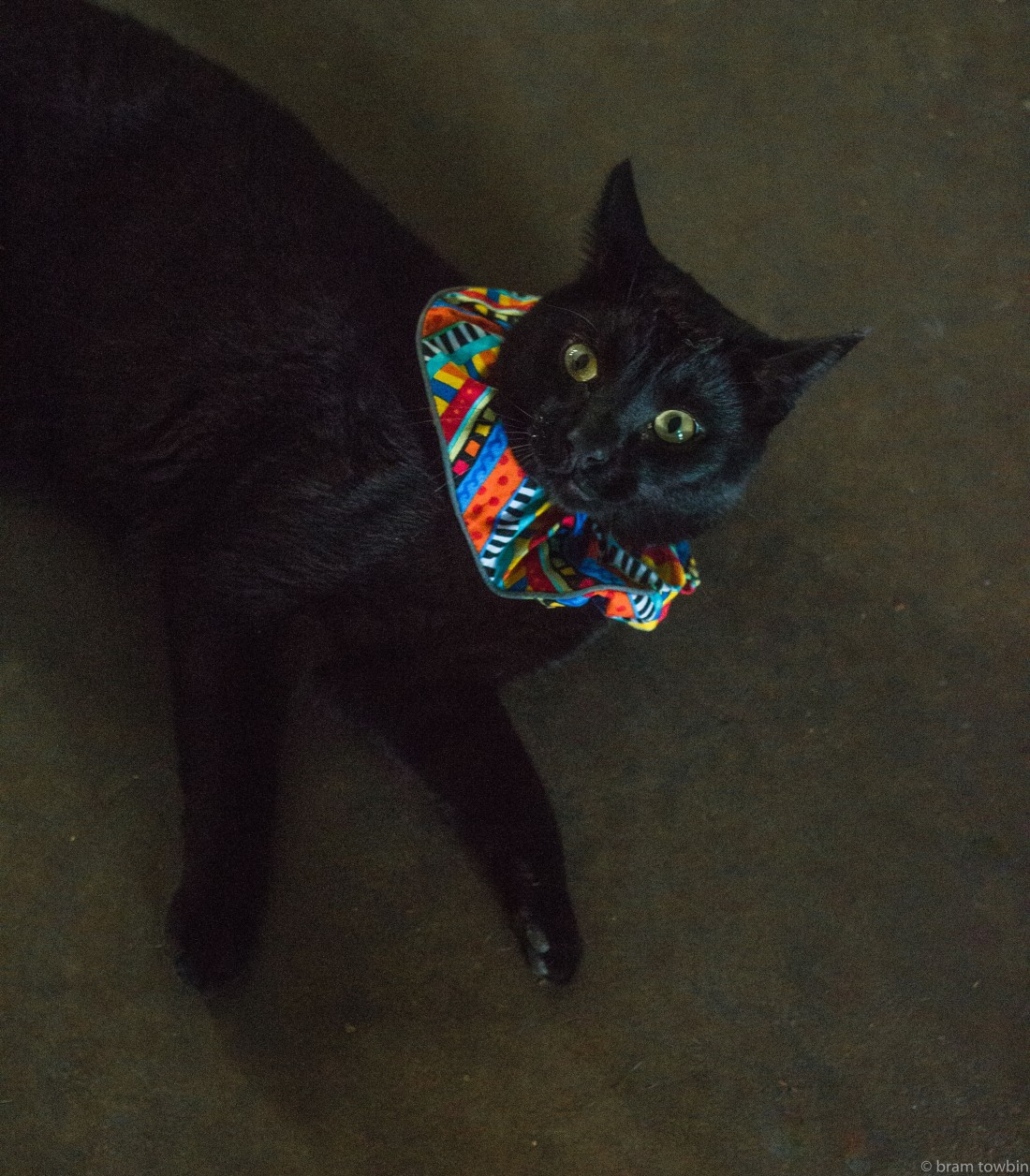 cat with anit-bird collar.jpg