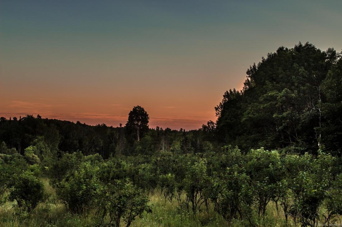 lilac field sunset heatwave.jpg