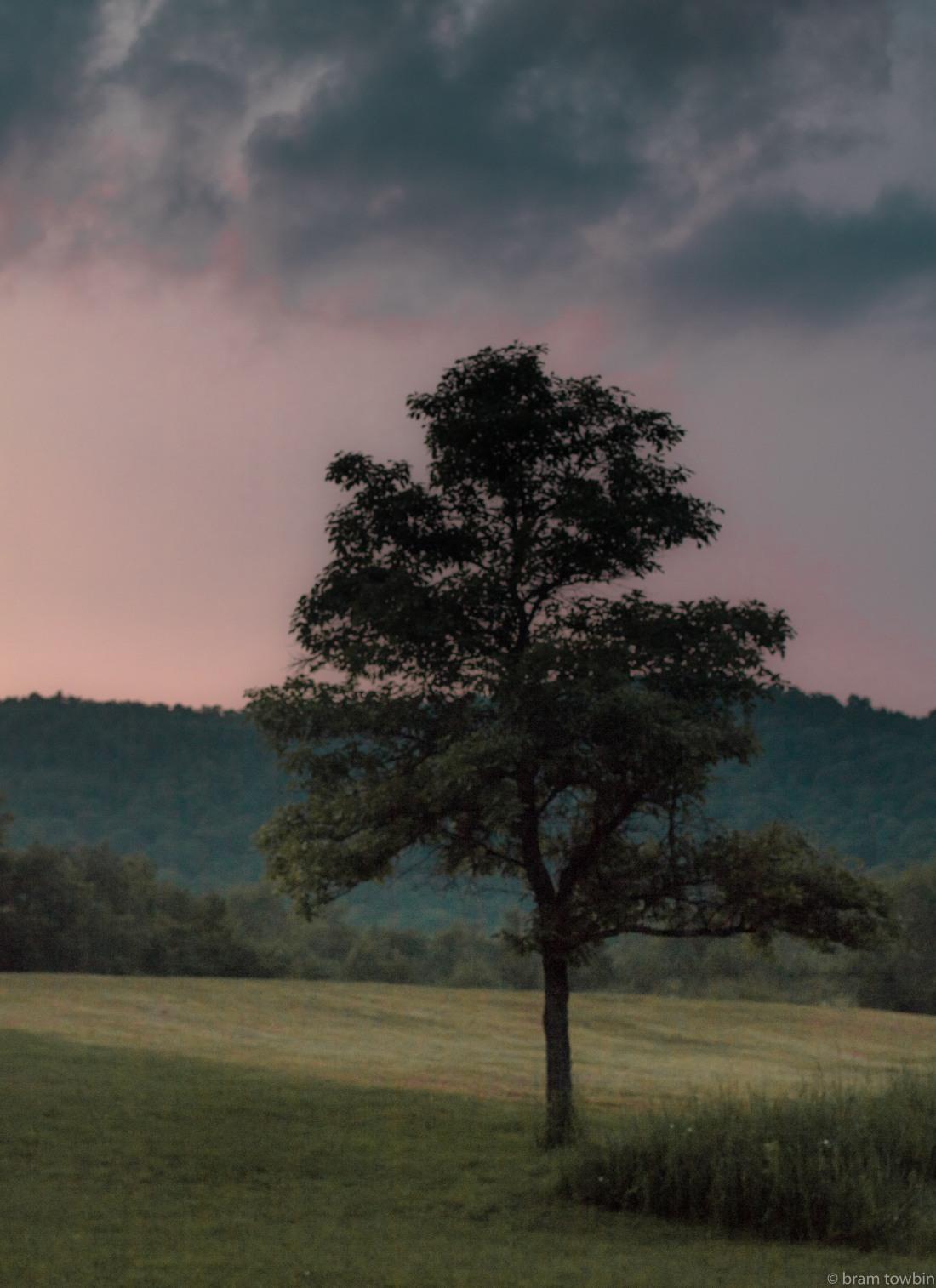 tree at bills_.jpg