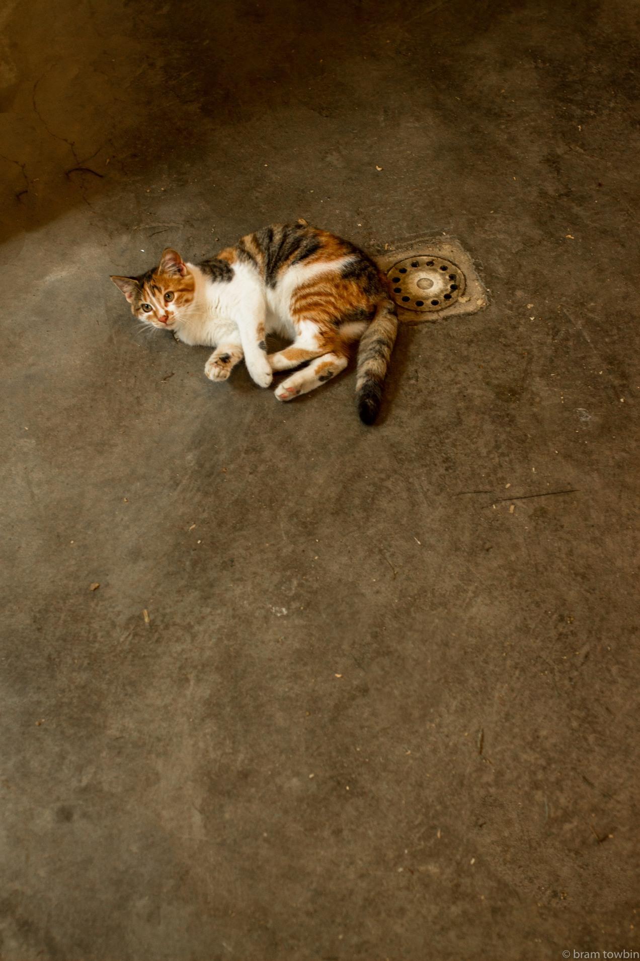 cat near drain_.jpg