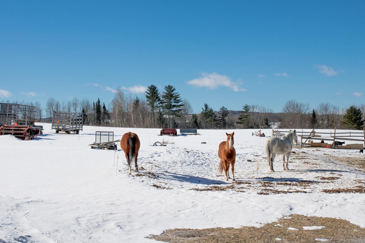 horses in snow.jpg