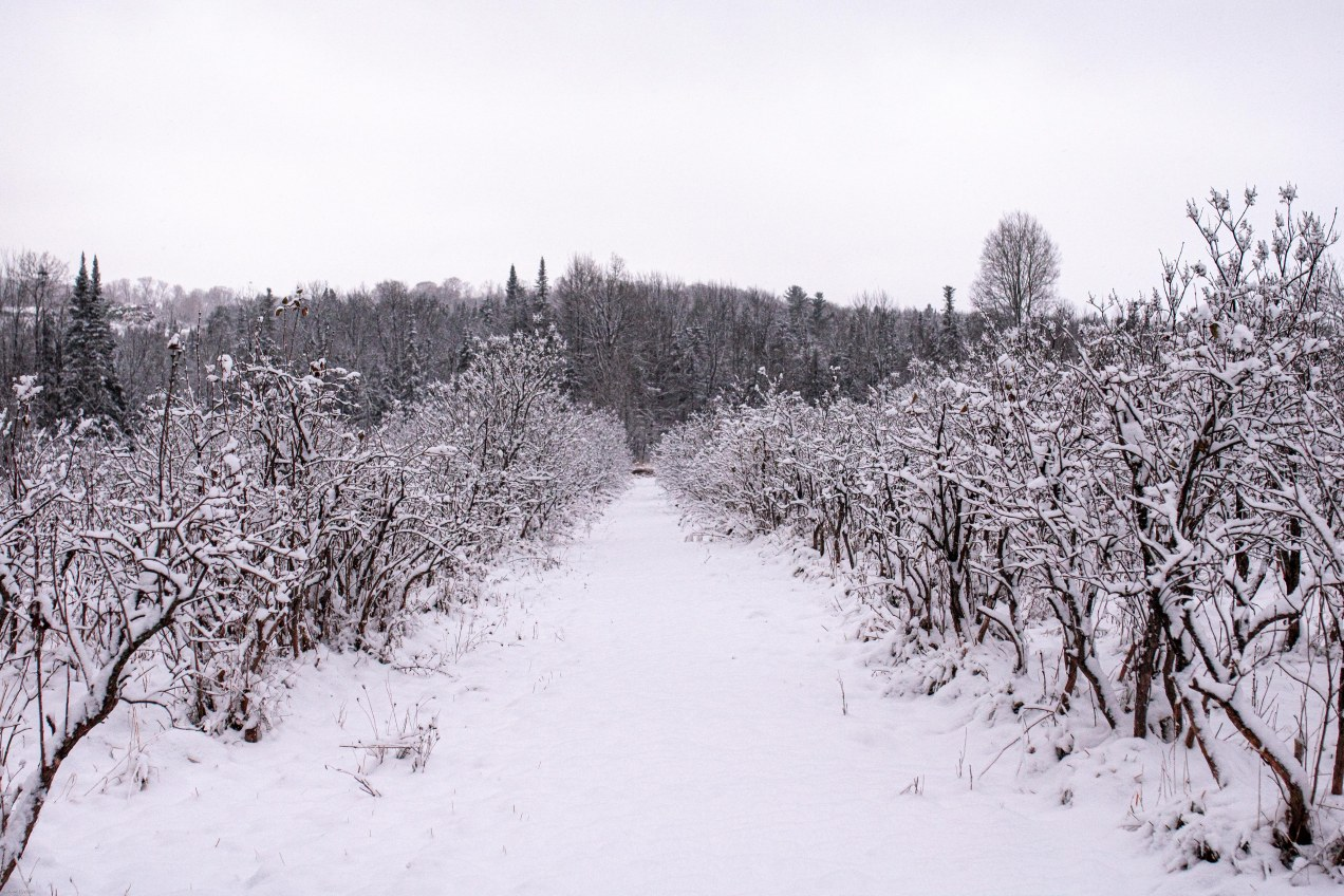 first snow_