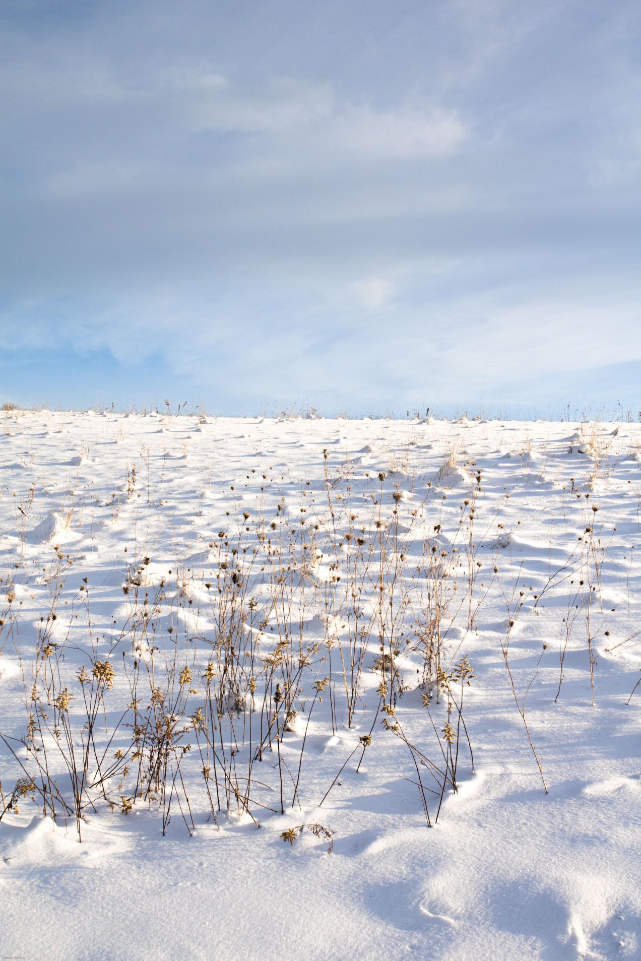off flood blank field sky winter snow