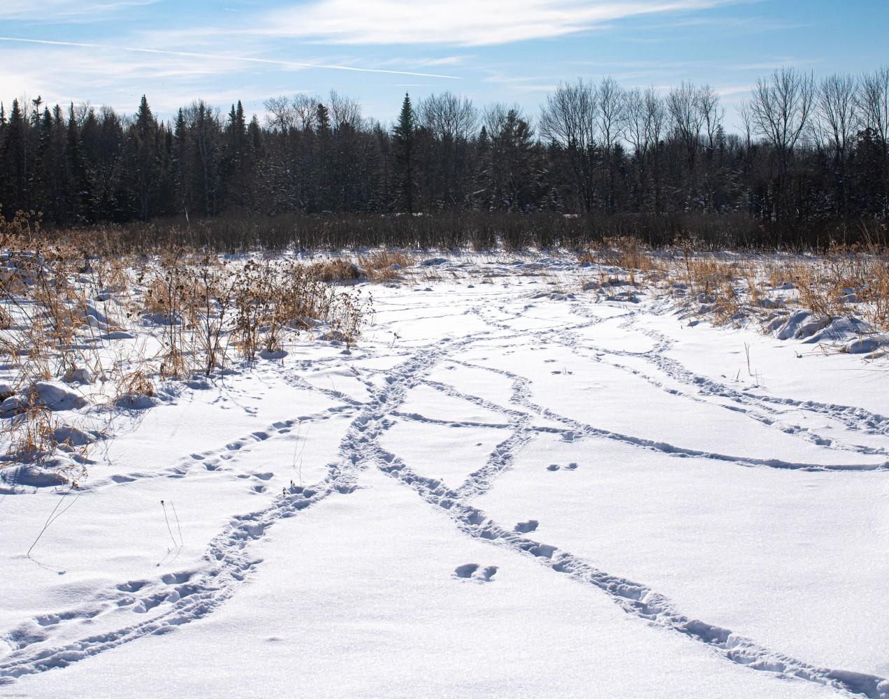 p 2 next to animal tracks